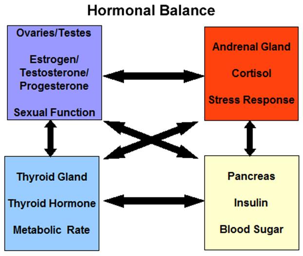 HormonalBalance