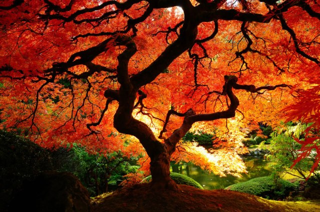 Fall tree beauty