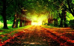 Pathway sunrise